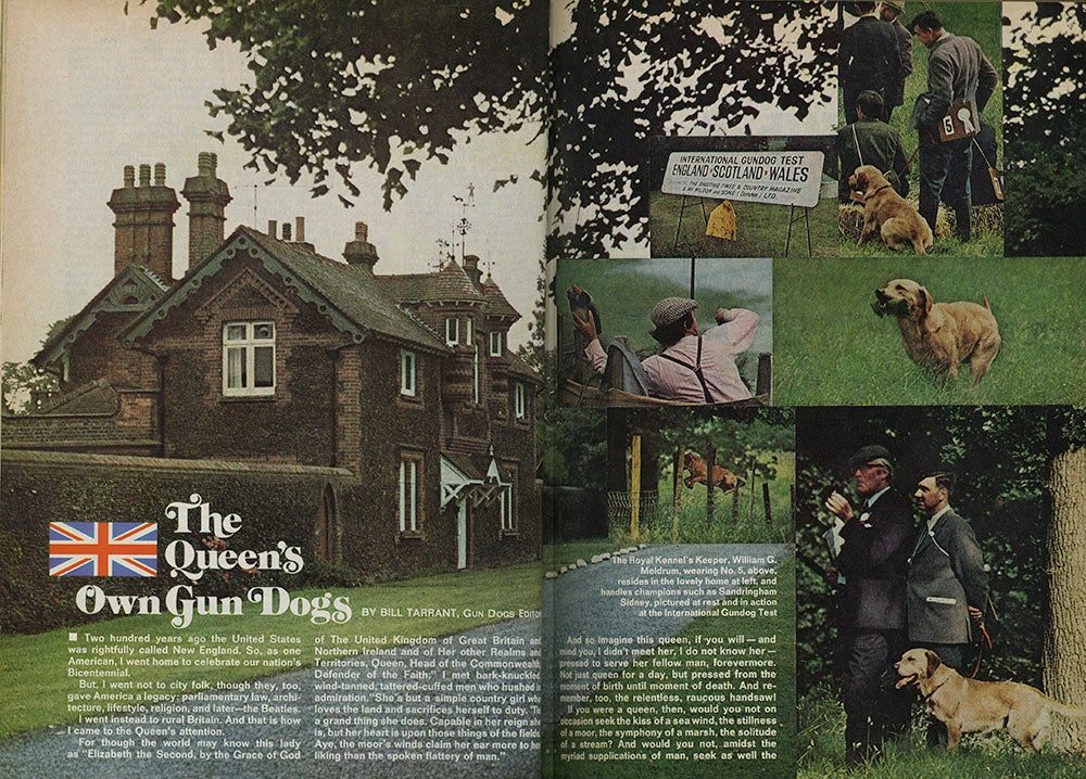 The interior spread of Field and Streams coverage of Queen Elizabeth and her gun dogs