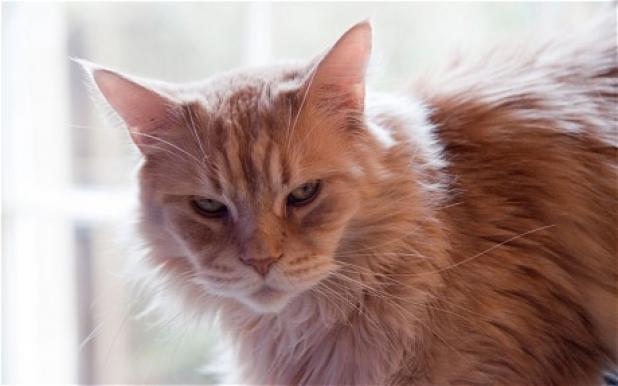 httpswww.fieldandstream.comsitesfieldandstream.comfilesimport2014importBlogPostembedHouse_Cat_Might_be_Essex_Lion.jpg