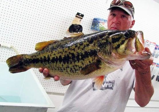 httpswww.fieldandstream.comsitesfieldandstream.comfilesimport2014importBlogPostembedDelaware-State-Record-Bass.jpg