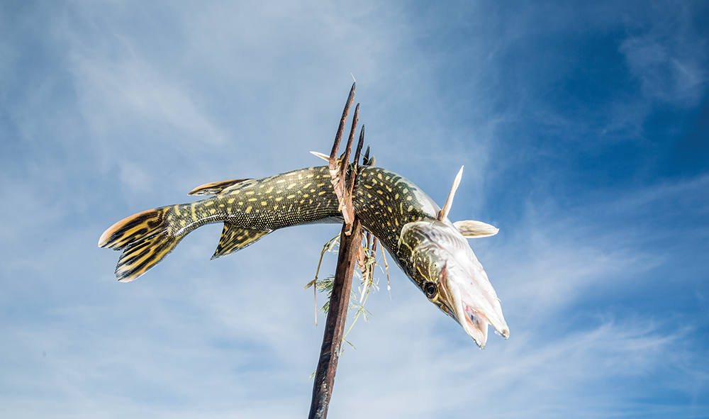 Spear and Trembling: The Ancient Art of Stabbing Pike Through the Ice