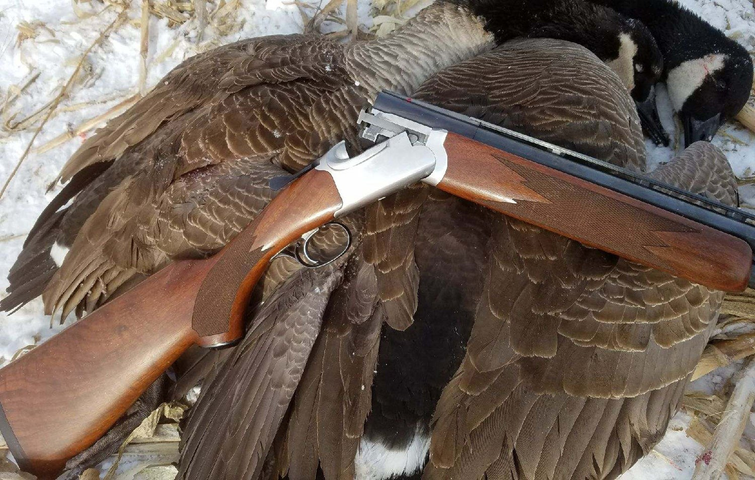 Ruger Red Label, canada geese, waterfowl hunting