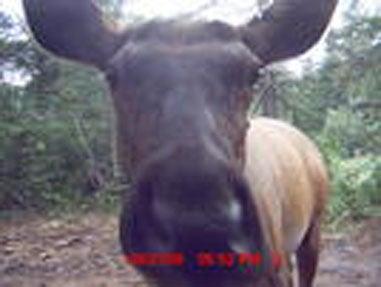 httpswww.fieldandstream.comsitesfieldandstream.comfilesimport2014importImage2008legacy41818364.jpg
