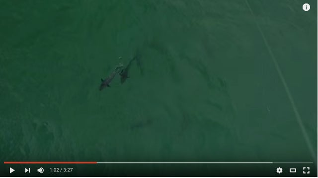 Surf Fishing For Tuna With A Drone