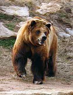 httpswww.fieldandstream.comsitesfieldandstream.comfilesimport2014importBlogPostembedgrizzly-bear-attack.jpg