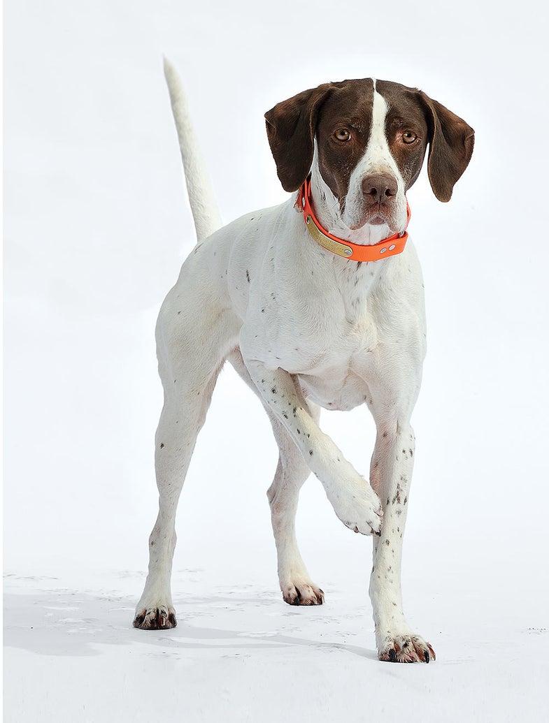 6 tips training point dog