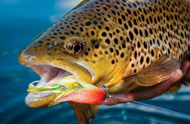 Video: How To Tie Articulated Streamers For Really Big Trout