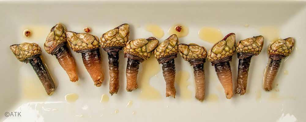 flash-fried goosneck barnacles