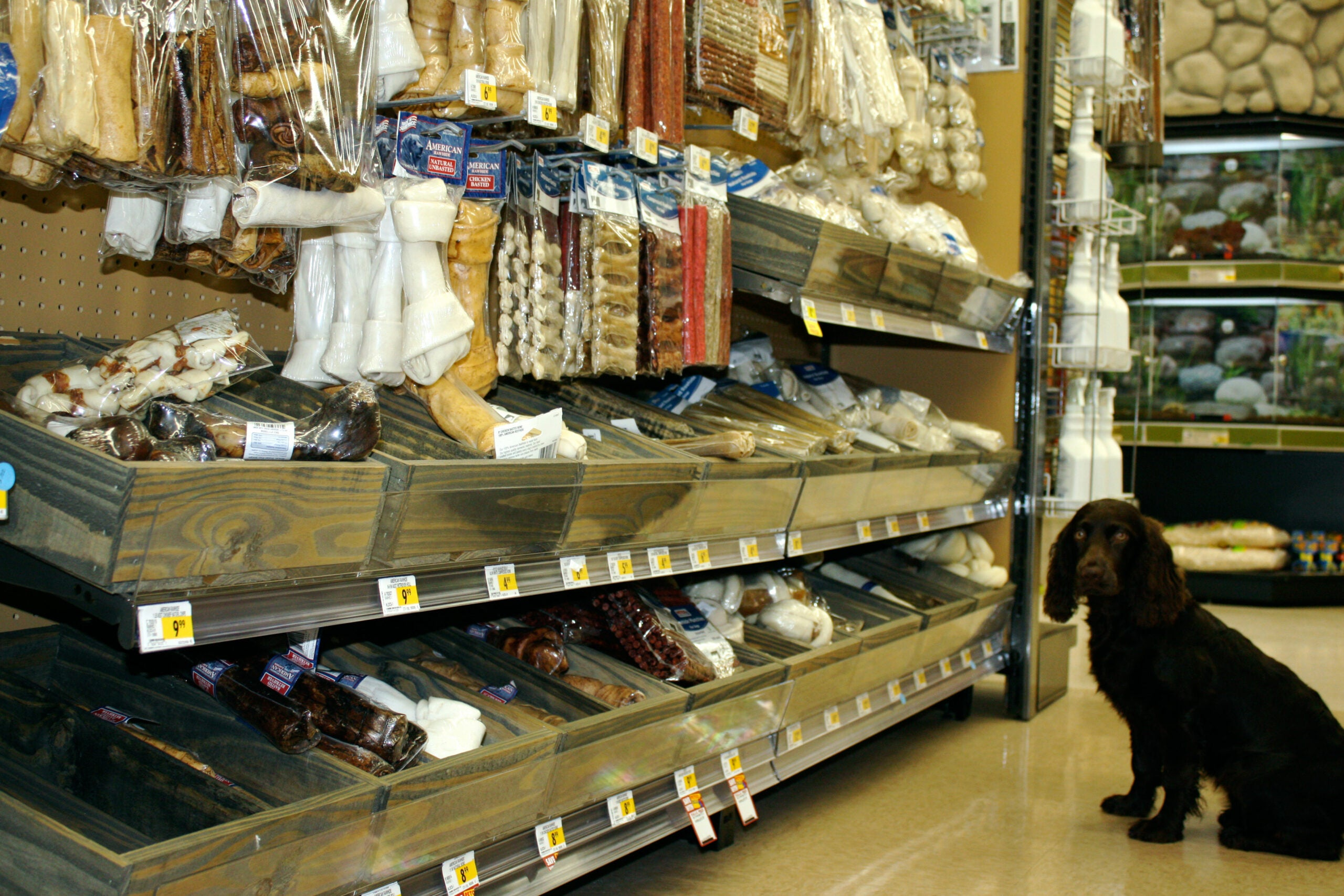 Rawhide: Good or Bad for Pup?