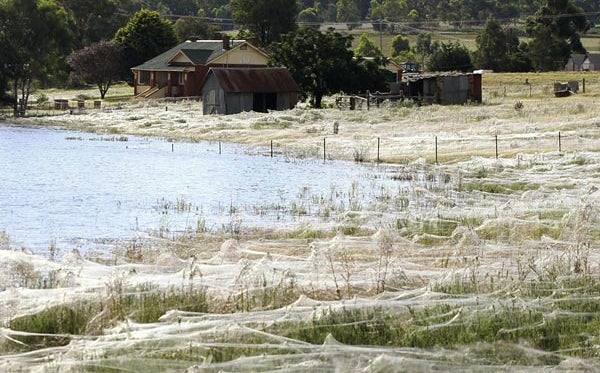 httpswww.fieldandstream.comsitesfieldandstream.comfilesimport2014importBlogPostembedspider-webs-australia-floods-field_49728_600x450.jpg