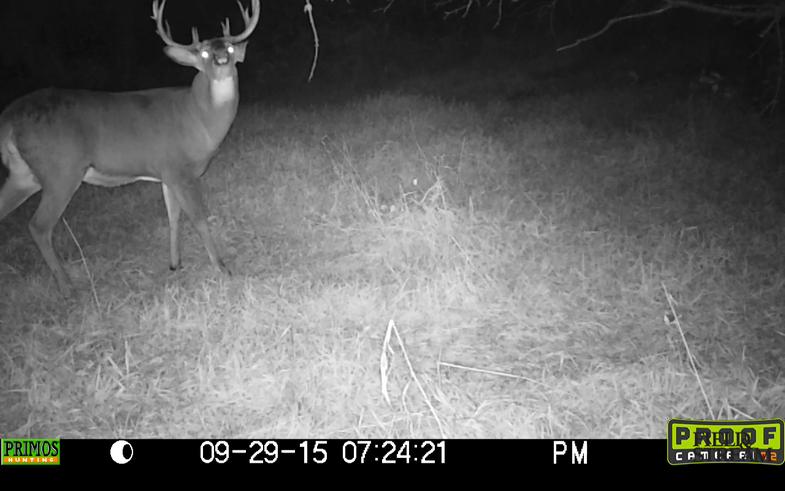 Buck on Mock Scrape