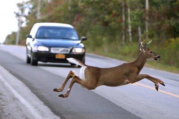 Bowhunters Help Reduce Car-Deer Collisions Outside Cincinnati