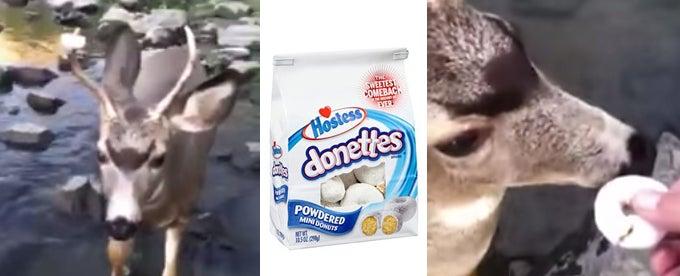 Video: Man Removes Powdered Doughnut from Mule Deer's Antler