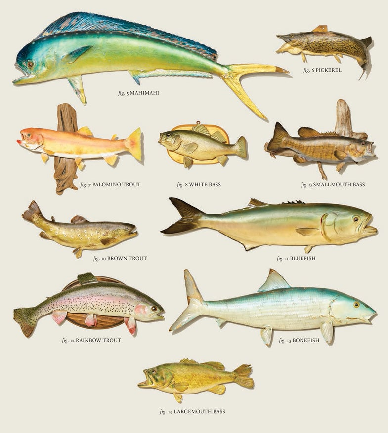 Skin Deep: Keeping the Glory of Old, Forgotten Fish Mounts Alive