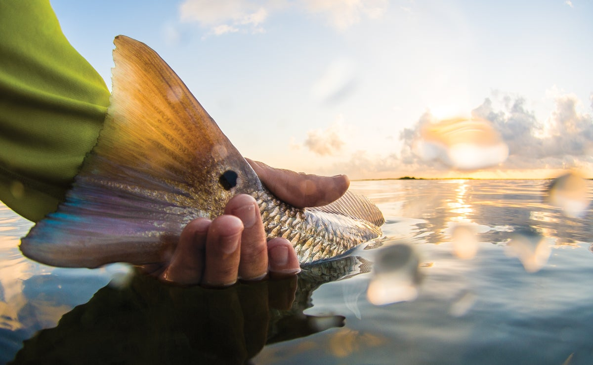 How to Spot Redfish on the Flats, Even in Dirty Water