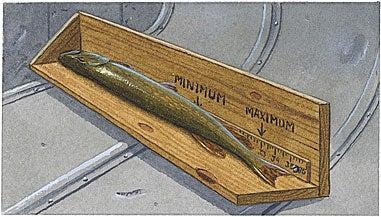 Measure Slot Fish