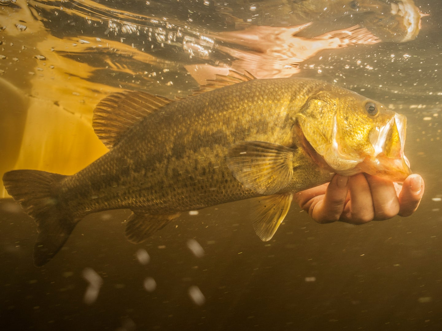The 8 Essential Rules of Flyfishing for Bass
