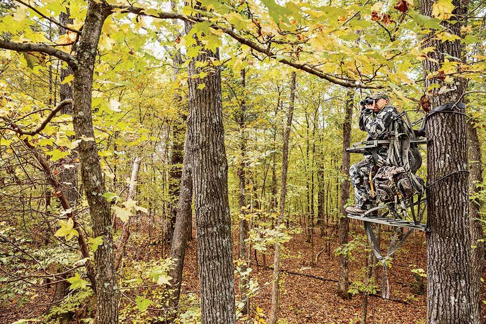 hunter glassing on public land whitetail
