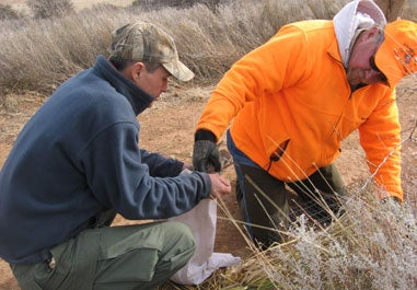 httpswww.fieldandstream.comsitesfieldandstream.comfilesimport2014importImage2009photo23Quail_11.jpg