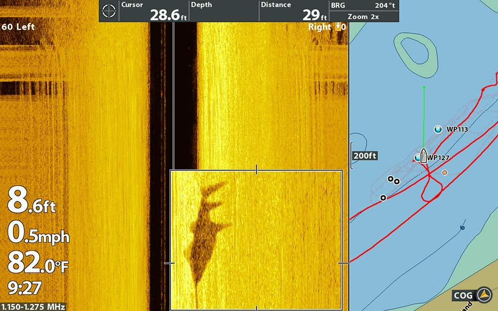 sawfish on sonar scan