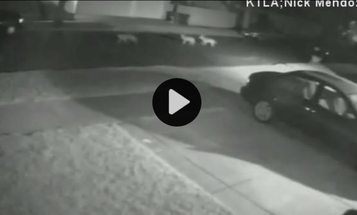 Video: Pack of Coyotes Chases Man and Dog Through Neighborhood