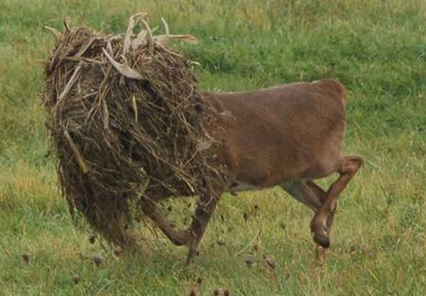 Write the Best Caption, Win Some Food Plot Seed