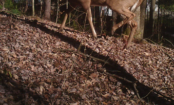 It's a Great Time to Hunt Deer