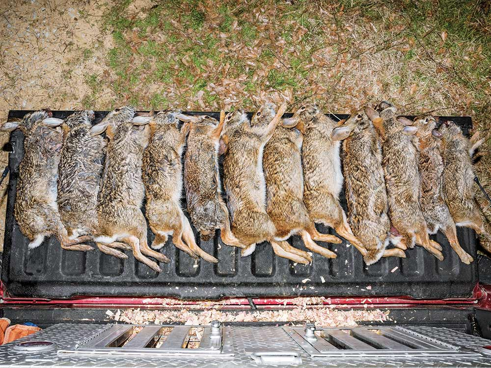 rabbits on a truck tailgate