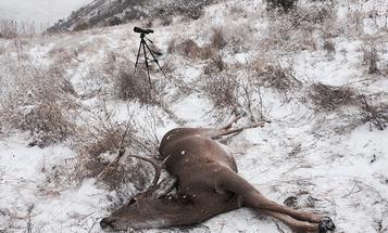 Idaho Bucks at Peak Rut