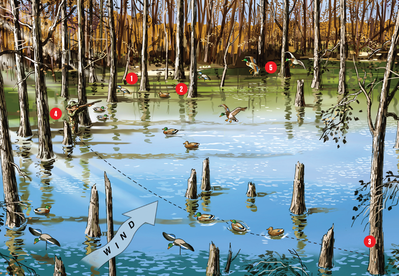 Waterfowl: How to Hunt Mallards in Flooded Timber