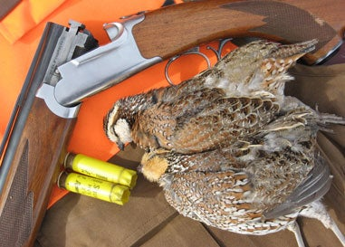 httpswww.fieldandstream.comsitesfieldandstream.comfilesimport2014importImage2009photo23Quail_08.jpg