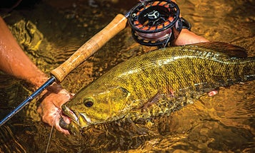 Why Late Summer Is the Best Time to Target Smallmouths on the Fly