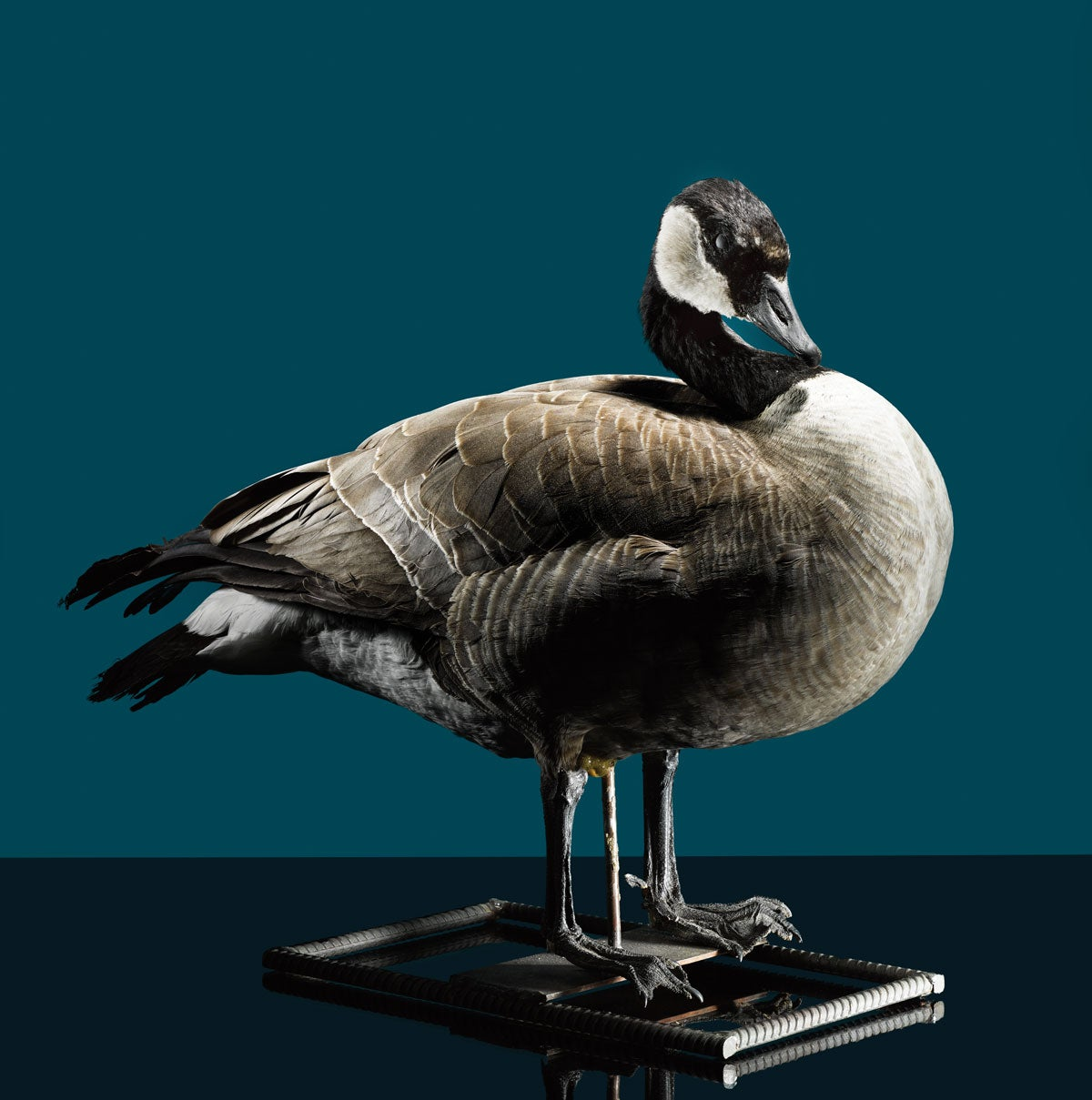 The Real Stuff: Make a Taxidermied Goose Decoy