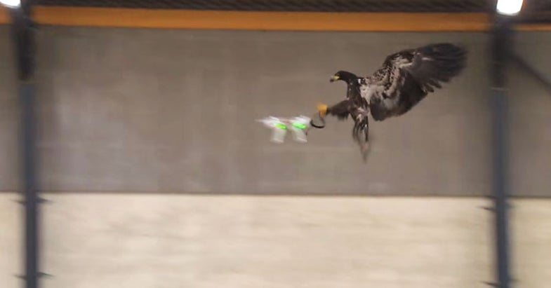 Video: Company Training Eagles to Take Down Illegal Drones