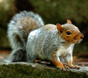 How to Hunt Squirrel With a Muzzleloader