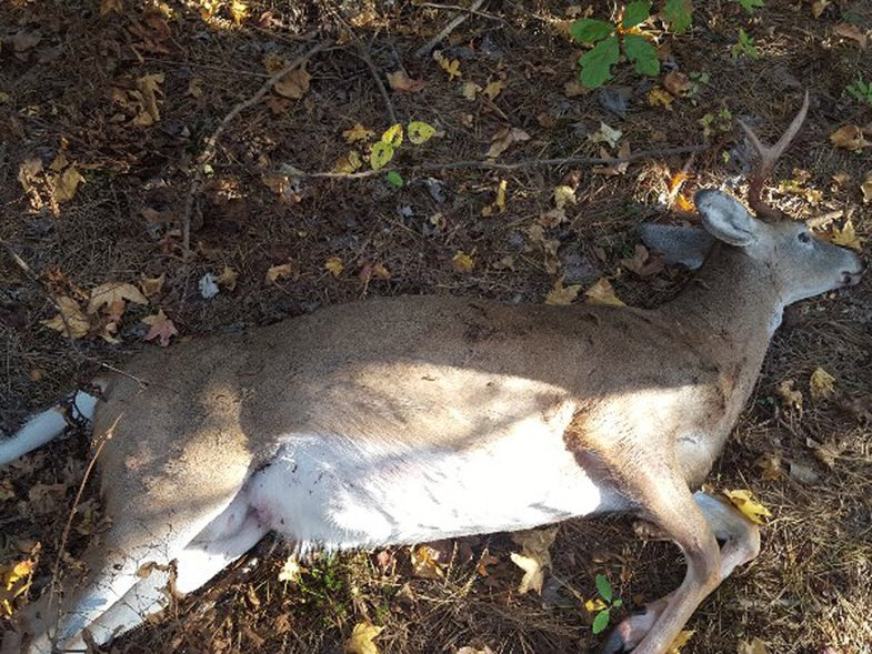 Two Maryland Poachers Face 73 Charges for Killing Eight Deer