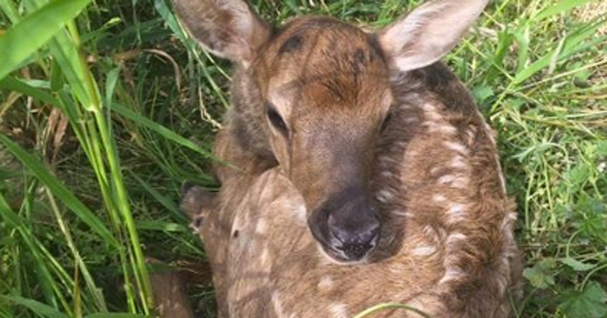 Miracle Elk Calf Survives Crash That Claims Mother