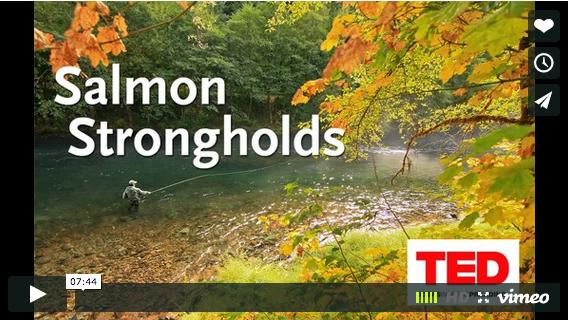 TEDx Talk: Salmon Strongholds