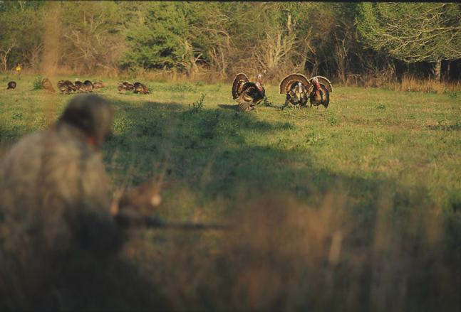 Turkey Hunting: Fall Turkey Tactics for Spring Gobblers in Flocks