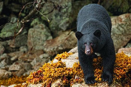 Bear Down: A Field & Stream Adventure on Prince of Wales Island