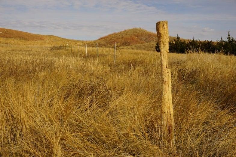 Scrapes Popping in South Dakota