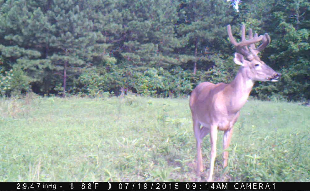 Trail Camera Season