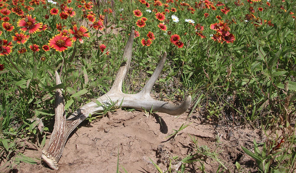 Deer Season 2015: The Year to Kill Your Biggest Buck Ever