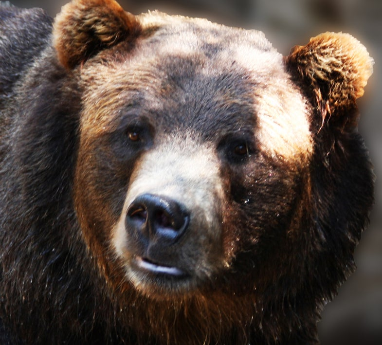 How To Survive A Grizzly Bear Attack