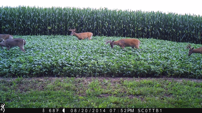What My Trail Cameras Taught Me This Fall