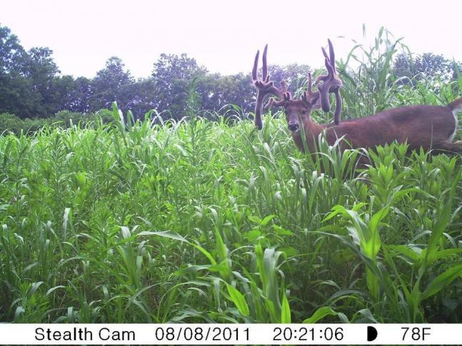 Top 40 Field & Stream Reader Photos: August 2011