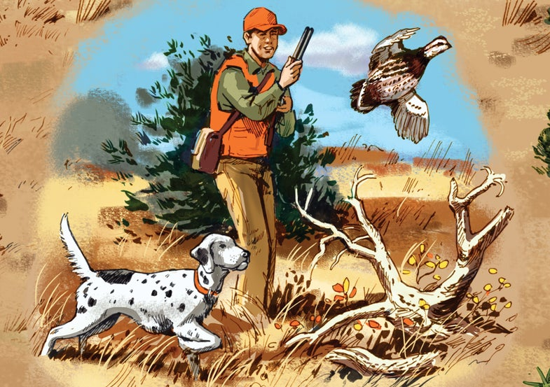 Be Ready When Bobwhites Explode at Your Feet