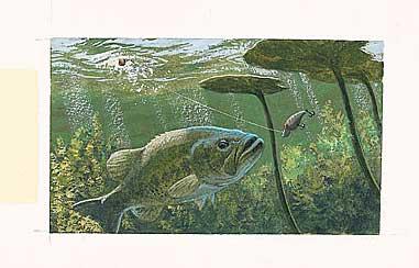 Attract Sun-Shy Fish