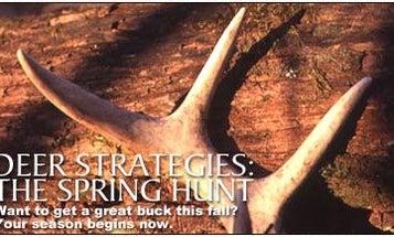 Deer Strategies: The Spring Hunt