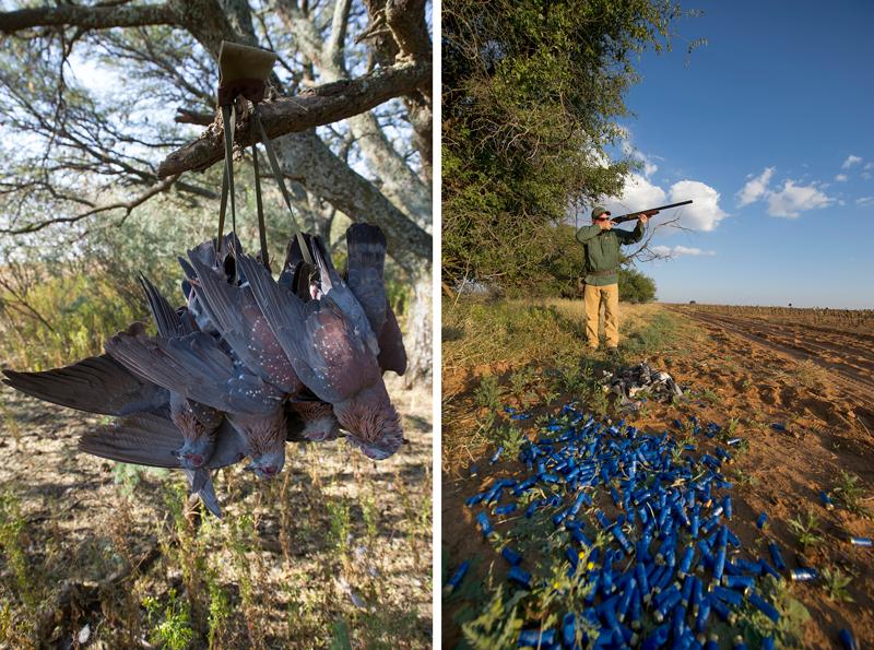 httpswww.fieldandstream.comsitesfieldandstream.comfilesimport2014Africa-Hanging-Birds-Shells.png