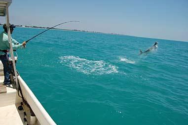 tarpon fishing pictures
